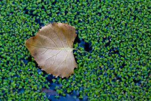 Leaf-on-Green.jpg
